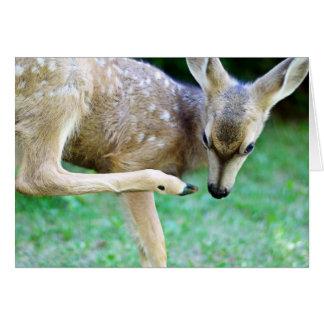 Deer - Scratch that Itch Card