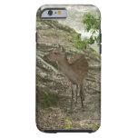 Deer Shell iPhone 6 Case