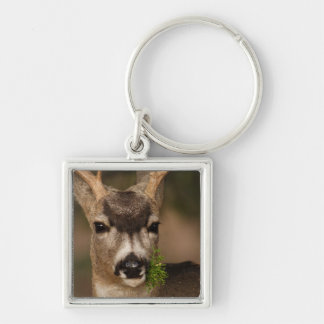 deer Silver-Colored square key ring