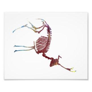 Deer skeleton photo