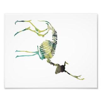 Deer skeleton photograph