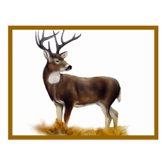 Deer standing alone on customizable products postcards