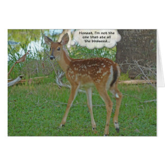 Deer thinking about birdseed card