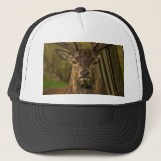Deer Trucker Hat