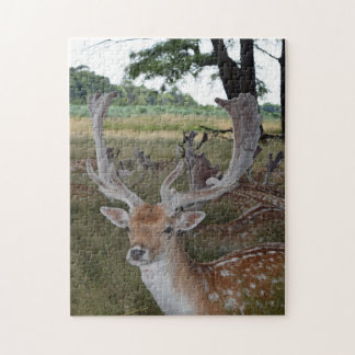 Deer up close photo puzzle