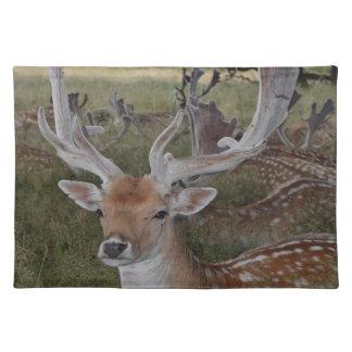 Deer up close placemat