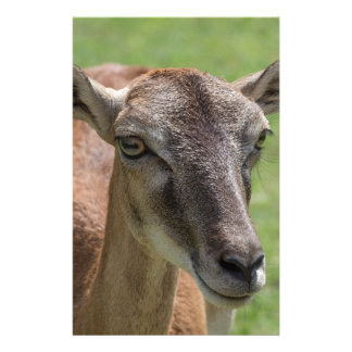 deer walking in the park stationery