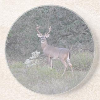 Deer walking on the ranch beverage coaster