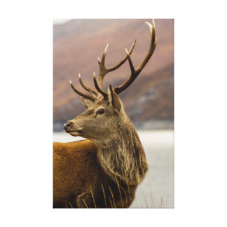 Deer With Antlers In A Scottish Glen Canvas Print