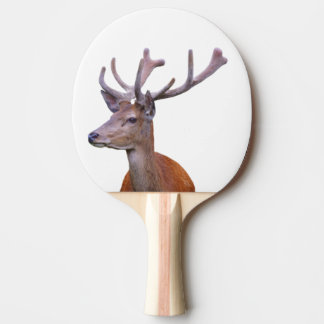 Deer woodland forest animal photo ping pong paddle