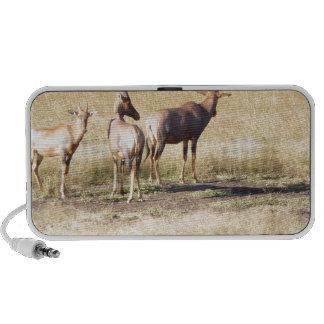 Deers Portable Speaker