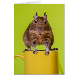 Degu on a Yellow Cup Card