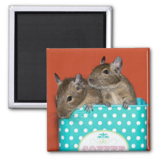 Degus with Polka Dots Square Magnet