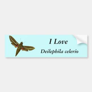Deilephila celerio bumper sticker
