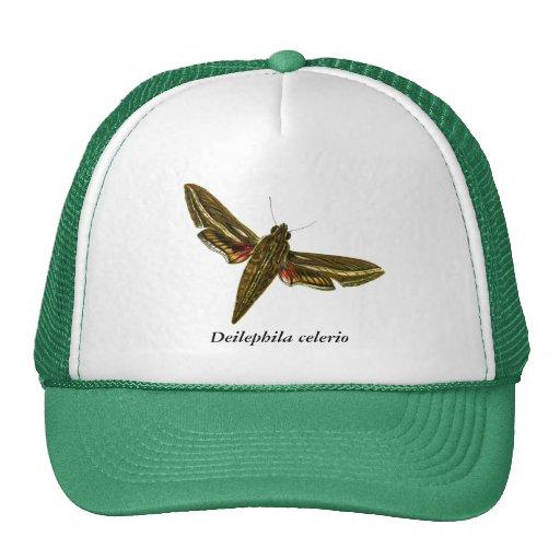 Deilephila celerio mesh hats