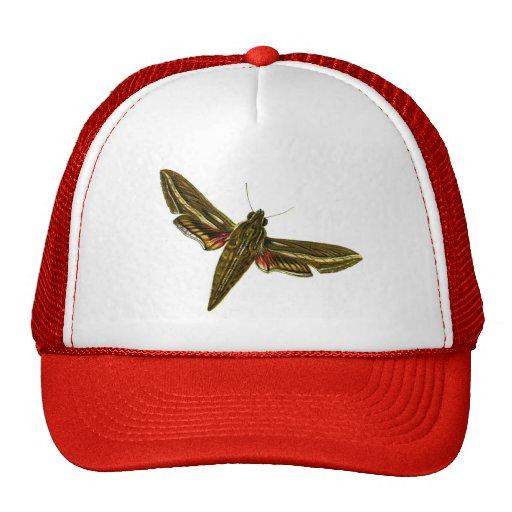 Deilephila celerio trucker hat