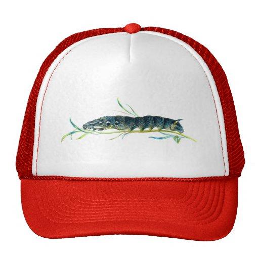 Deilephila elpenor caterpillar mesh hats