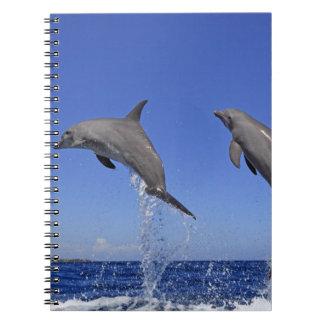 Delfin 2 notebook