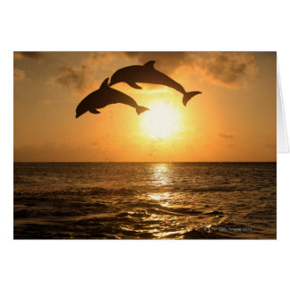Delfin 3 card