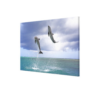 Delfin,Delphin,Grosser Tuemmler,Tursiops 2 Canvas Print