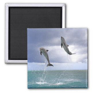 Delfin,Delphin,Grosser Tuemmler,Tursiops 2 Fridge Magnets