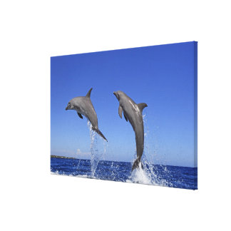 Delfin,Delphin,Grosser Tuemmler,Tursiops 3 Canvas Print