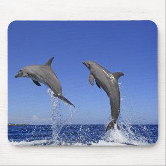 Delfin,Delphin,Grosser Tuemmler,Tursiops 3 Mouse Mat