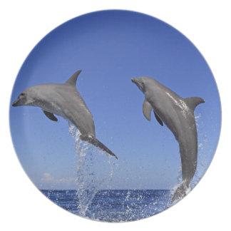 Delfin,Delphin,Grosser Tuemmler,Tursiops 3 Plate