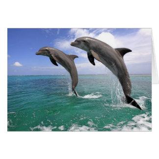 Delfin,Delphin,Grosser Tuemmler,Tursiops 4 Card