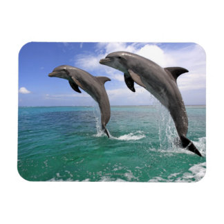 Delfin,Delphin,Grosser Tuemmler,Tursiops 4 Vinyl Magnet