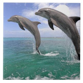 Delfin,Delphin,Grosser Tuemmler,Tursiops 4 Tile