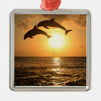 Delfin,Delphin,Grosser Tuemmler,Tursiops Christmas Ornament
