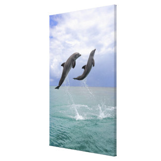 Delfin (Grosser Tuemmler) Canvas Print