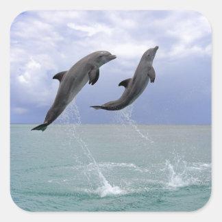 Delfin (Grosser Tuemmler) Square Sticker