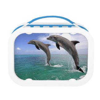 Delfin Lunch Box
