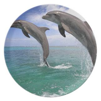 Delfin Plate