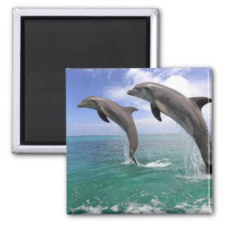 Delfin Square Magnet