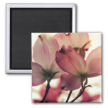Delicate Afternoon Petals Magnet
