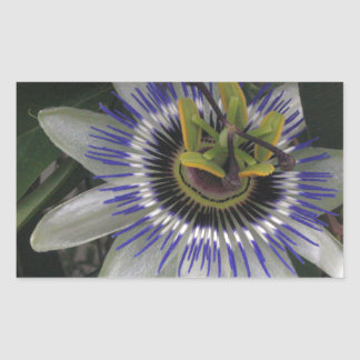 Delicate and Beautiful Passiflora Flower Rectangle Sticker
