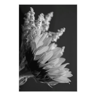 Delicate Contrast Photo Print