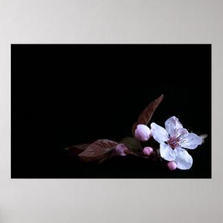 Delicate Flower Poster