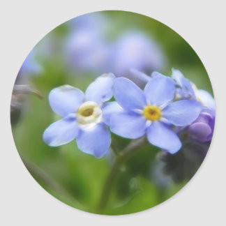 Delicate Forget Me Not Flowers Round Sticker