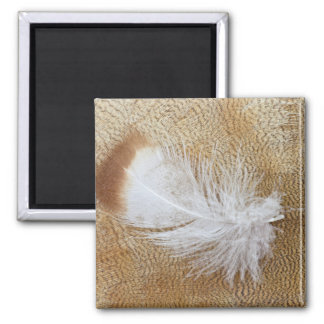 Delicate Goose Feathers Magnet