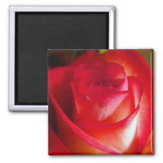 Delicate Layers Square Magnet
