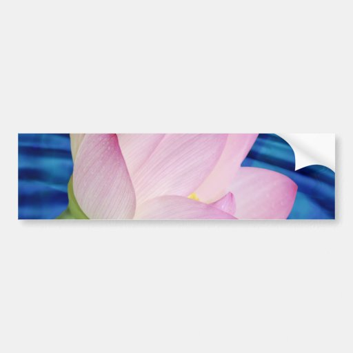 Delicate Lotus flower and meaning Bumper Stickers