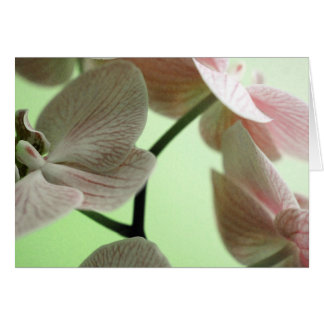 Delicate Orchids Card
