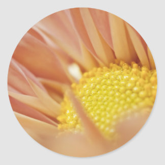 Delicate Peach and Yellow Flower Round Sticker