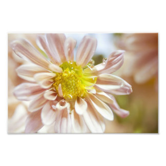 Delicate Peach Flower and Water Drop Photo Print