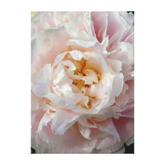 Delicate Pink Peony Flower Graphic Wrapped Canvas Gallery Wrap Canvas
