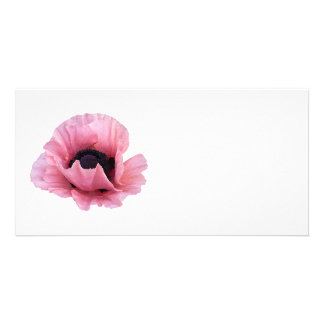 Delicate Pink Poppy Photo Cards